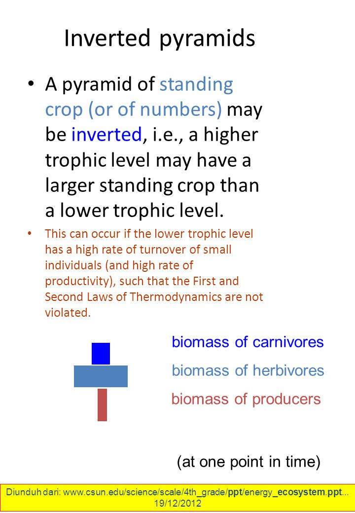 Inverted pyramids A pyramid of standing crop (or of numbers) may be inverted, i.e., a higher trophic level may have a larger standing crop than a lower trophic level.