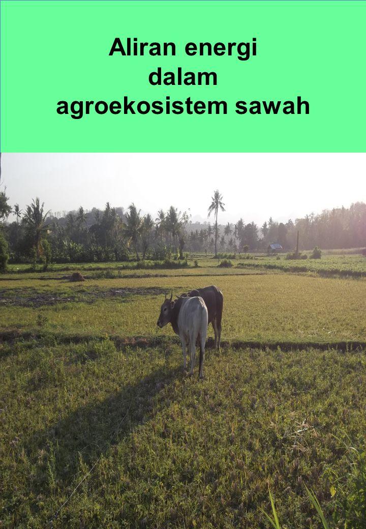 Aliran energi dalam agroekosistem sawah