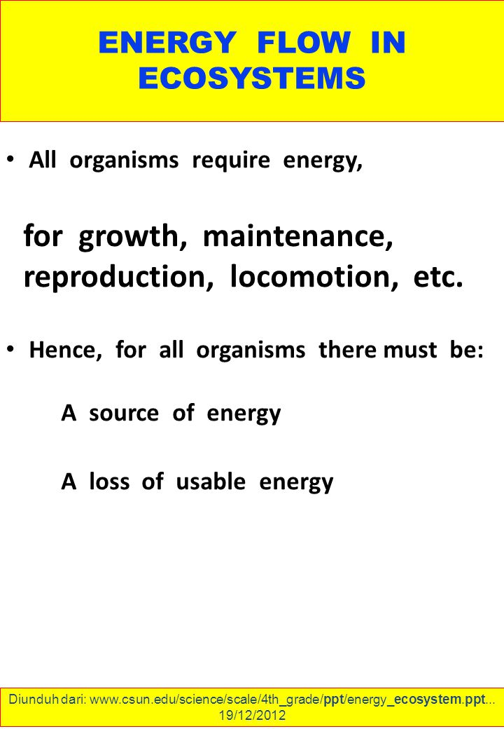 ENERGY FLOW IN ECOSYSTEMS All organisms require energy, for growth, maintenance, reproduction, locomotion, etc.
