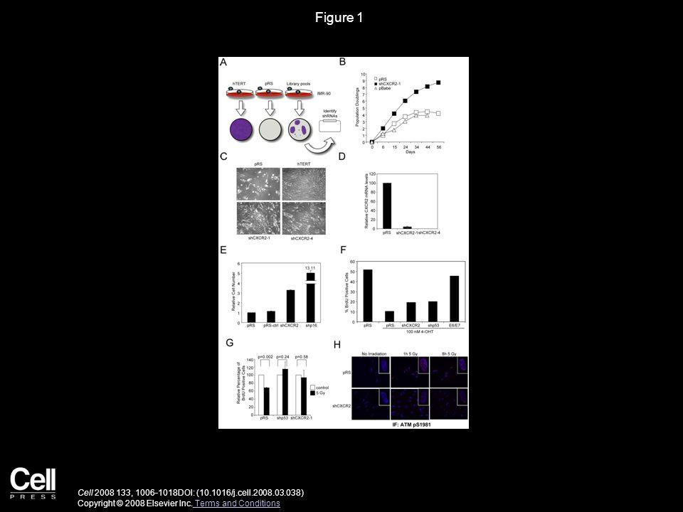 Figure 1 Cell 2008 133, 1006-1018DOI: (10.1016/j.cell.2008.03.038) Copyright © 2008 Elsevier Inc.