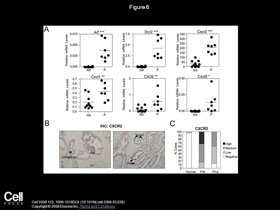 Figure 6 Cell 2008 133, 1006-1018DOI: (10.1016/j.cell.2008.03.038) Copyright © 2008 Elsevier Inc.