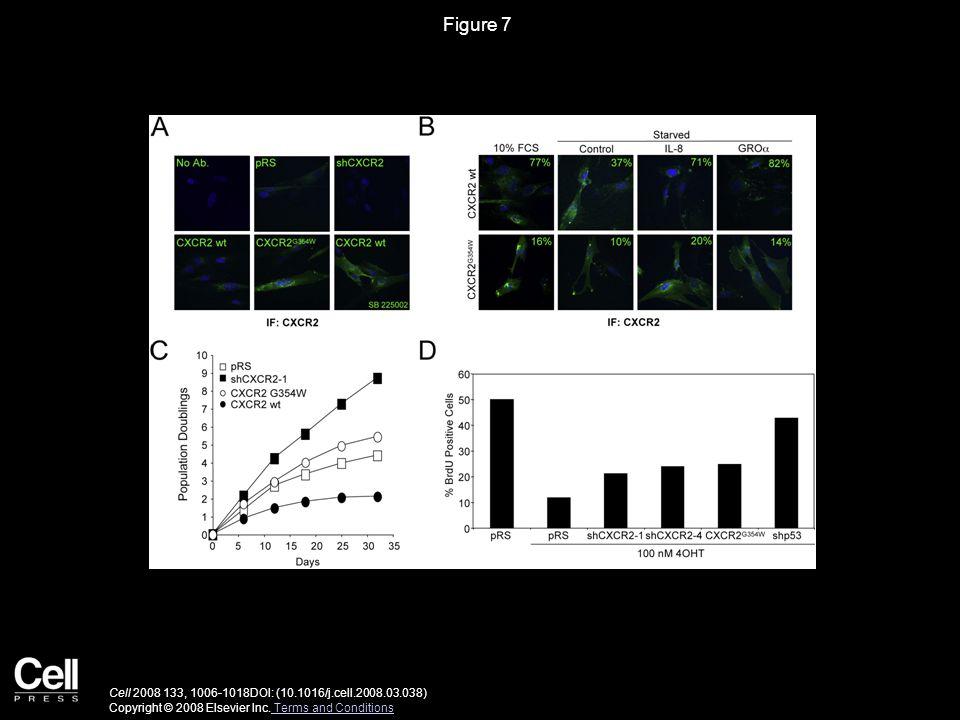Figure 7 Cell 2008 133, 1006-1018DOI: (10.1016/j.cell.2008.03.038) Copyright © 2008 Elsevier Inc.