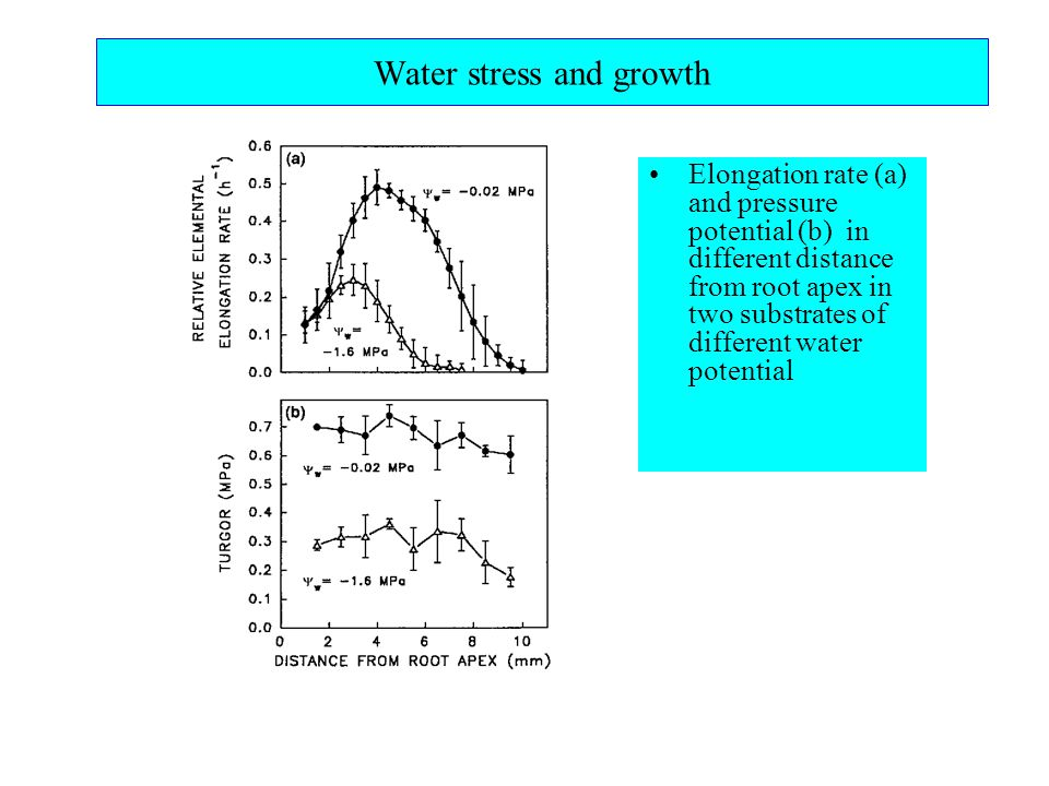 Water stress and growth Elongation rate (a) and pressure potential (b) in different distance from root apex in two substrates of different water potential