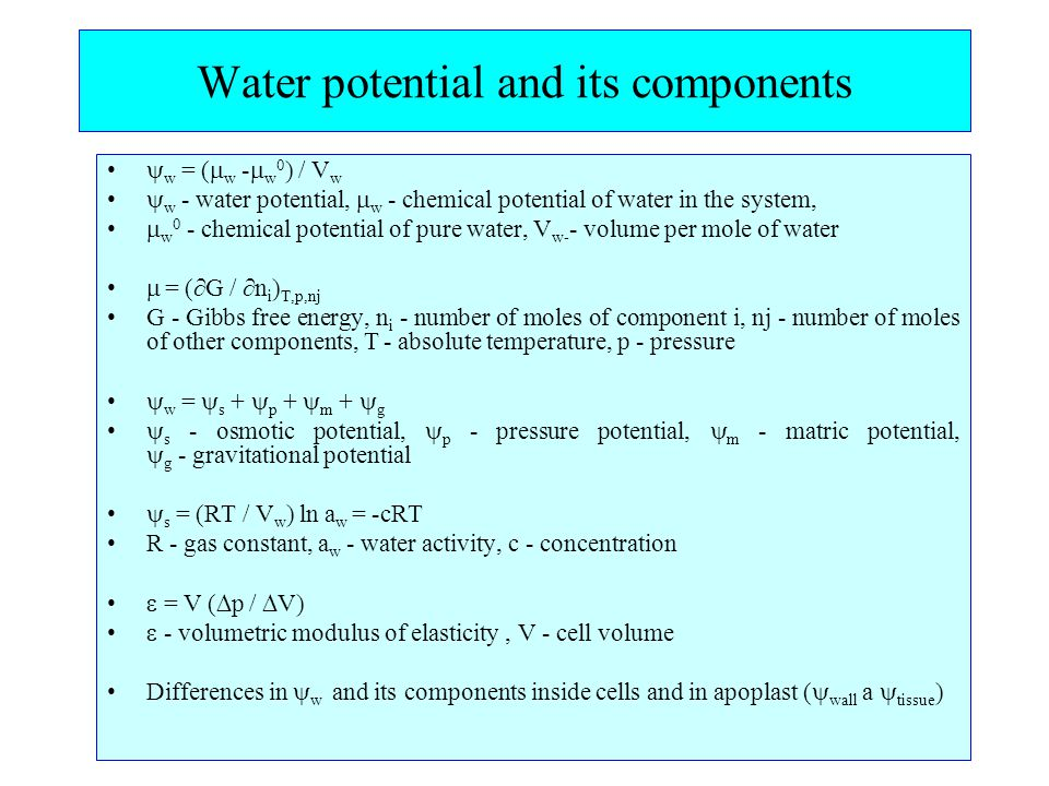 Water potential and its components  w = (  w -  w 0 ) / V w  w - water potential,  w - chemical potential of water in the system,  w 0 - chemical potential of pure water, V w- - volume per mole of water  = (  G /  n i ) T,p,nj G - Gibbs free energy, n i - number of moles of component i, nj - number of moles of other components, T - absolute temperature, p - pressure  w =  s +  p +  m +  g  s - osmotic potential,  p - pressure potential,  m - matric potential,  g - gravitational potential  s = (RT / V w ) ln a w = -cRT R - gas constant, a w - water activity, c - concentration  = V (  p /  V)  - volumetric modulus of elasticity, V - cell volume Differences in  w and its components inside cells and in apoplast (  wall a  tissue )