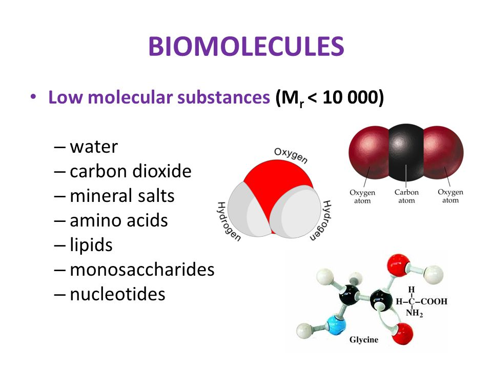 BIOMOLECULES Low molecular substances (M r < 10 000) – water – carbon dioxide – mineral salts – amino acids – lipids – monosaccharides – nucleotides