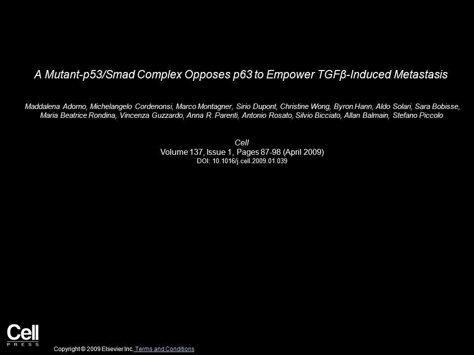 A Mutant-p53/Smad Complex Opposes p63 to Empower TGFβ-Induced Metastasis Maddalena Adorno, Michelangelo Cordenonsi, Marco Montagner, Sirio Dupont, Christine Wong, Byron Hann, Aldo Solari, Sara Bobisse, Maria Beatrice Rondina, Vincenza Guzzardo, Anna R.