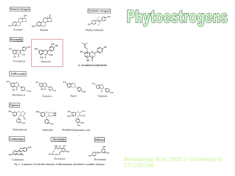 Comparison of binding affinities and transactivation of estrogen and phytoestrogens Belcher & Zsarnovszky, 2001.