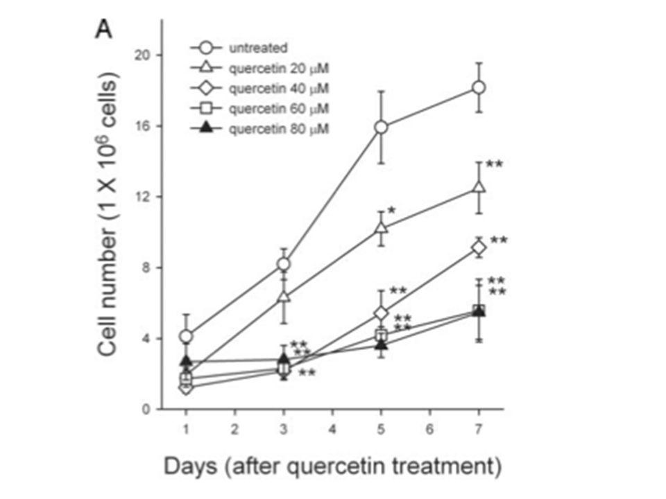 La quercetina causa un arresto in G2/M in carcinoma polmonare