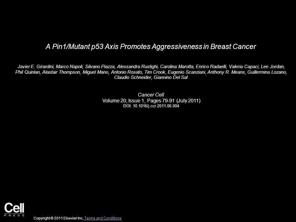 A Pin1/Mutant p53 Axis Promotes Aggressiveness in Breast Cancer Javier E. Girardini, Marco Napoli, Silvano Piazza, Alessandra Rustighi, Carolina Marot