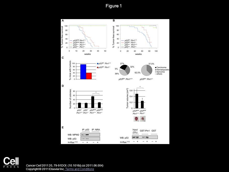 Figure 1 Cancer Cell 2011 20, 79-91DOI: (10.1016/j.ccr.2011.06.004) Copyright © 2011 Elsevier Inc.