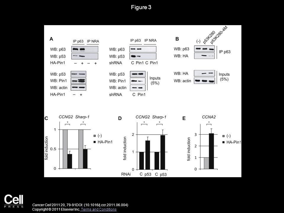 Figure 3 Cancer Cell 2011 20, 79-91DOI: (10.1016/j.ccr.2011.06.004) Copyright © 2011 Elsevier Inc.