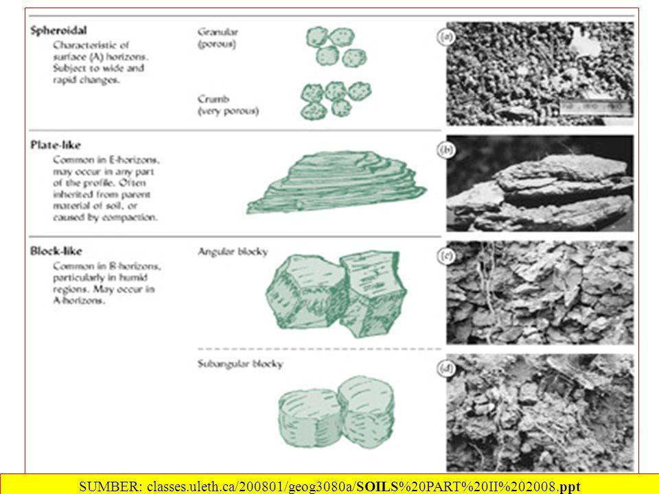 SUMBER: classes.uleth.ca/200801/geog3080a/SOILS%20PART%20II%202008.ppt
