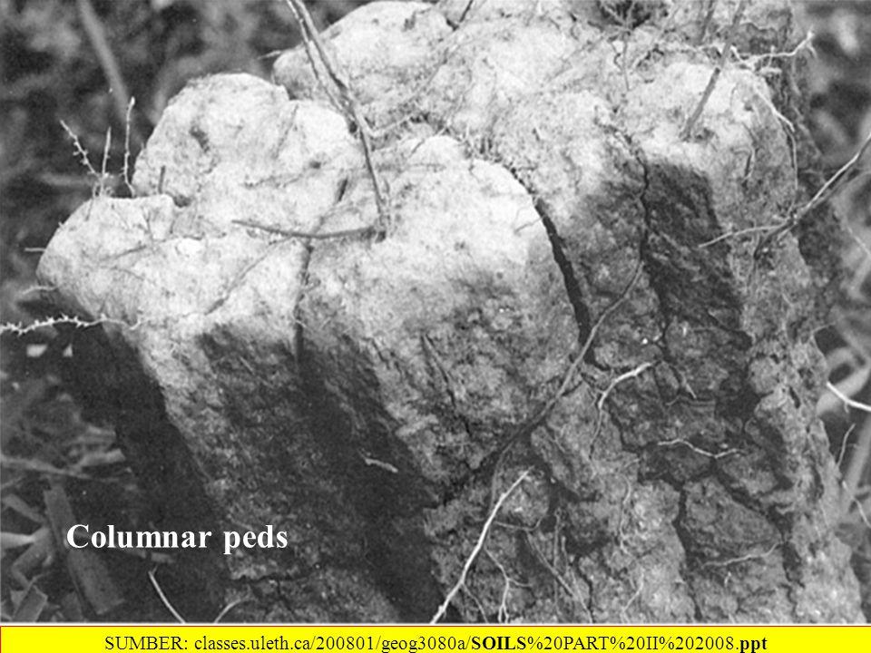 Columnar peds SUMBER: classes.uleth.ca/200801/geog3080a/SOILS%20PART%20II%202008.ppt