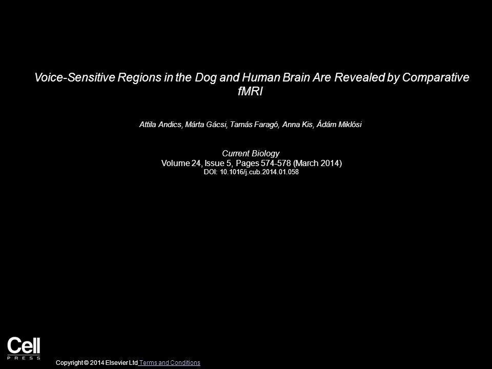 Voice-Sensitive Regions in the Dog and Human Brain Are Revealed by Comparative fMRI Attila Andics, Márta Gácsi, Tamás Faragó, Anna Kis, Ádám Miklósi Current Biology Volume 24, Issue 5, Pages 574-578 (March 2014) DOI: 10.1016/j.cub.2014.01.058 Copyright © 2014 Elsevier Ltd Terms and Conditions Terms and Conditions