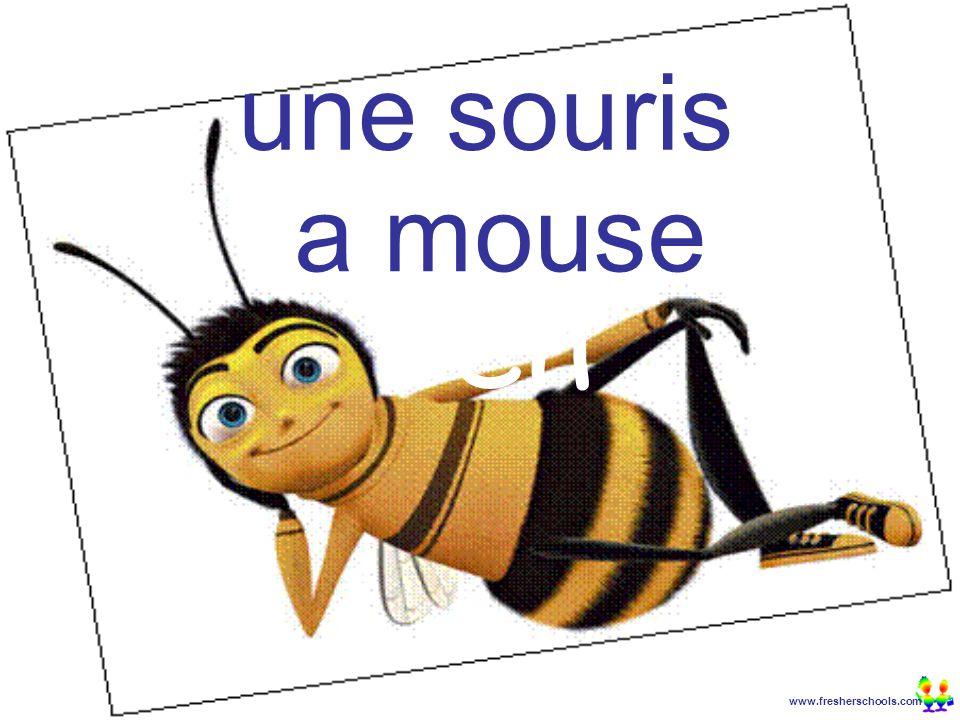 www.fresherschools.com Ben une souris a mouse