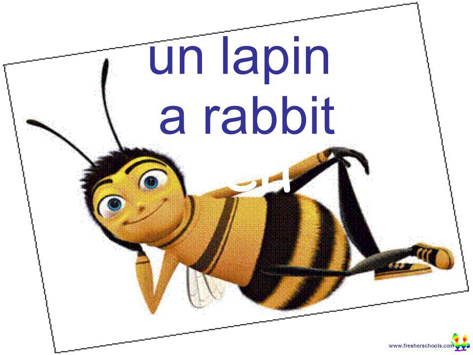 www.fresherschools.com Ben un lapin a rabbit