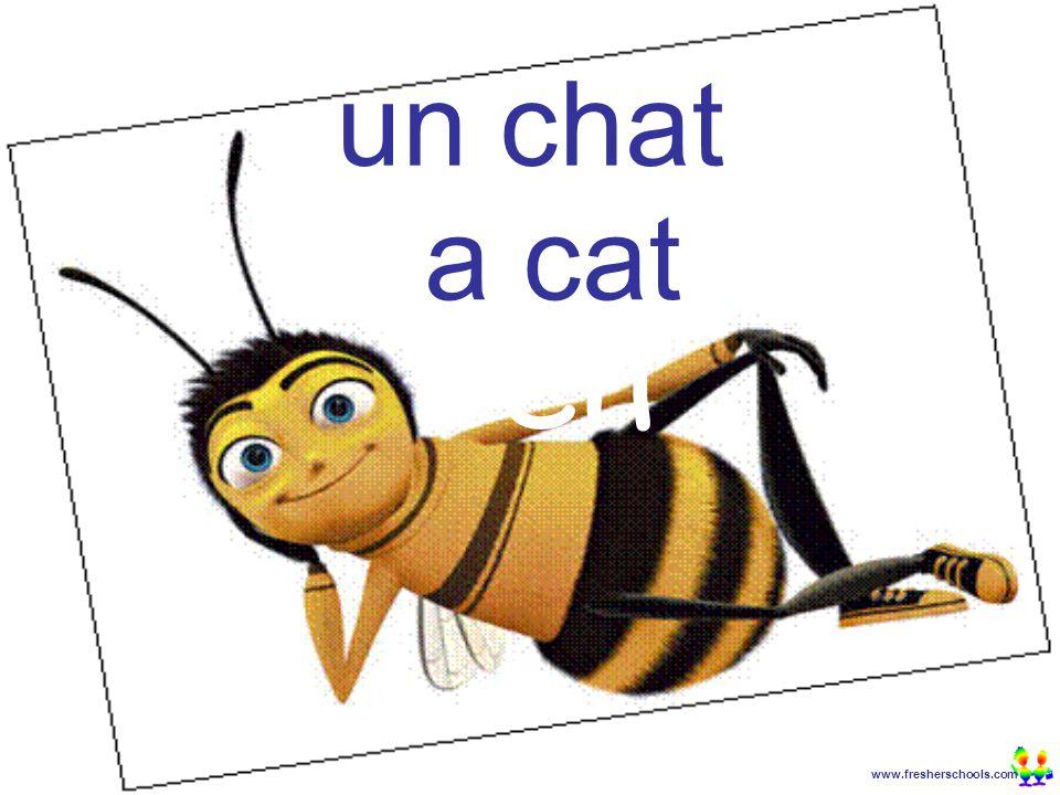 www.fresherschools.com Ben un chat a cat