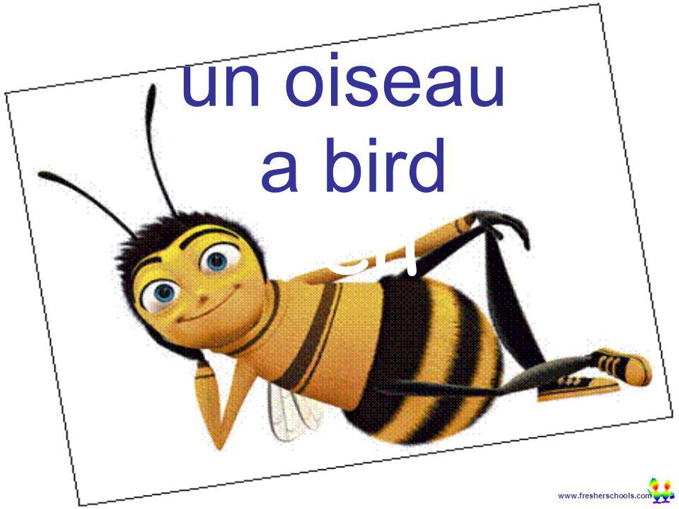 www.fresherschools.com Ben un oiseau a bird
