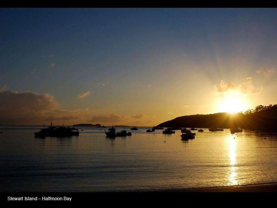 Stewart Island – Halfmoon Bay