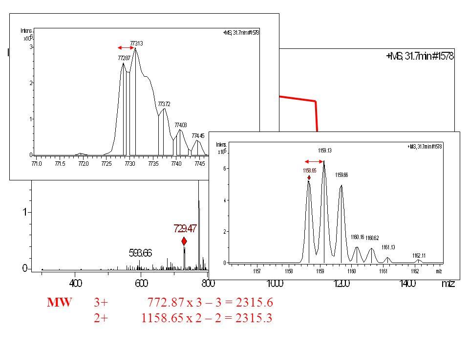 MS spektrum 3+ 2+ MW3+ 772.87 x 3 – 3 = 2315.6 2+1158.65 x 2 – 2 = 2315.3