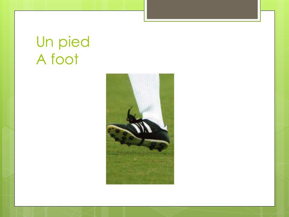 Un pied A foot