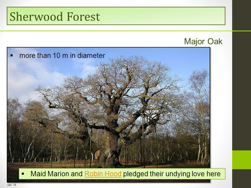 Sherwood Forest obr.