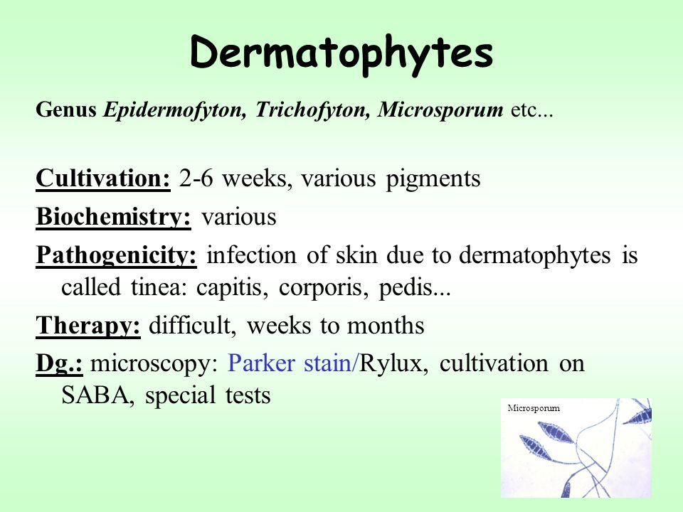Dermatophytes Genus Epidermofyton, Trichofyton, Microsporum etc... Cultivation: 2-6 weeks, various pigments Biochemistry: various Pathogenicity: infec
