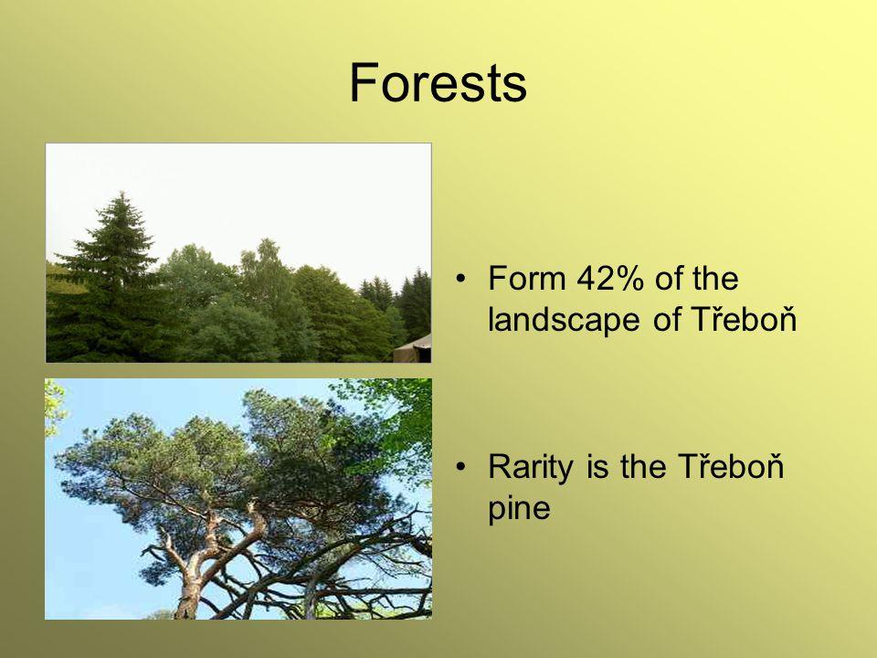 Forests Form 42% of the landscape of Třeboň Rarity is the Třeboň pine