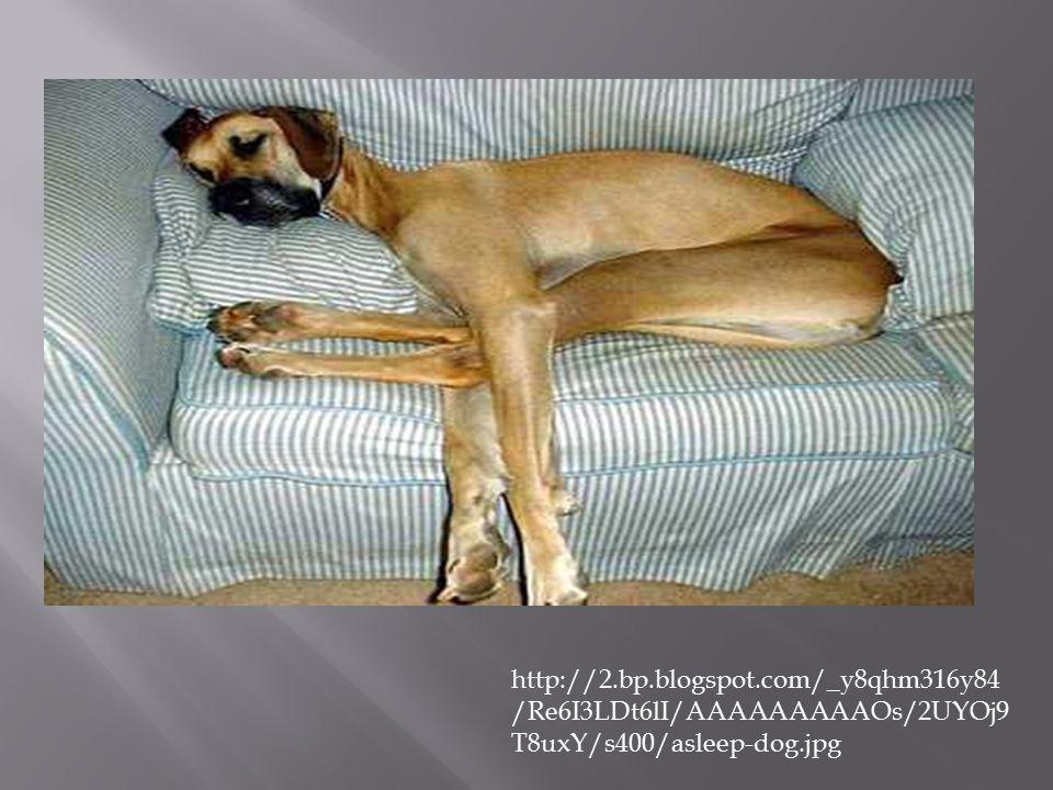 http://2.bp.blogspot.com/_y8qhm316y84 /Re6I3LDt6lI/AAAAAAAAAOs/2UYOj9 T8uxY/s400/asleep-dog.jpg