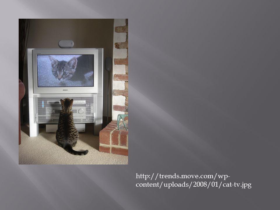 http://trends.move.com/wp- content/uploads/2008/01/cat-tv.jpg