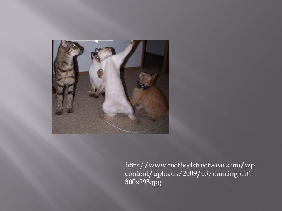 http://www.methodstreetwear.com/wp- content/uploads/2009/03/dancing-cat1- 300x293.jpg