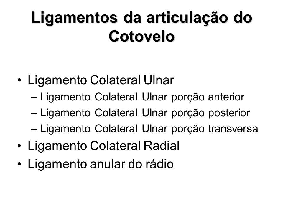 Ligamentos da articulação do Cotovelo Ligamento Colateral Ulnar –Ligamento Colateral Ulnar porção anterior –Ligamento Colateral Ulnar porção posterior –Ligamento Colateral Ulnar porção transversa Ligamento Colateral Radial Ligamento anular do rádio