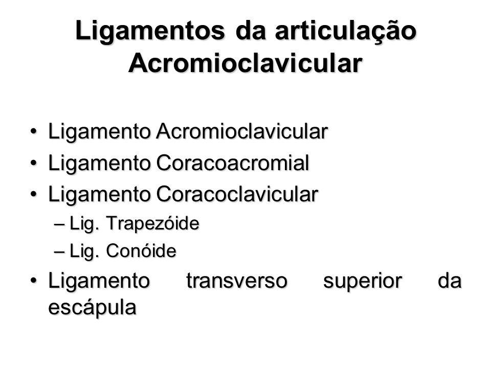 Ligamentos da articulação Acromioclavicular Ligamento AcromioclavicularLigamento Acromioclavicular Ligamento CoracoacromialLigamento Coracoacromial Ligamento CoracoclavicularLigamento Coracoclavicular –Lig.
