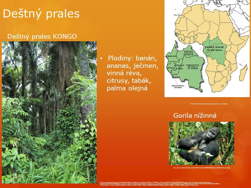Deštný prales http://rainforests.mongabay.com/congo/congo_basin_countries2.jpg http://www.google.cz/imgres q=prales+kongo&hl=cs&client=firefox&rls=org.mozilla:cs:official&biw=1600&bih=777&tbm=isch&tbnid=ZNv3pRwEDfmDgM:&imgrefurl=http://www.lideazeme.cz/clanek/nejmensi-z- malych&docid=c82WohtKMqjNjM&imgurl=http://www.lideazeme.cz/files/imagecache/dust_filerenderer_normal/files/upload/story_press/2029/031_001_jpg_4919893205.jpg&w=500&h=750&ei=IkGwTqvKK9HTsgaO16R5&zoom =1&iact=hc&vpx=711&vpy=106&dur=852&hovh=275&hovw=183&tx=69&ty=173&sig=106629072010650233122&page=1&tbnh=129&tbnw=86&start=0&ndsp=32&ved=1t:429,r:3,s:0 Plodiny: banán, ananas, ječmen, vinná réva, citrusy, tabák, palma olejná Deštný prales KONGO http://img.ihned.cz/attachment.php/710/19844710/aiotv458EFGKOk6QWcfhpqrxz0STUw9A/07_IN_07.jpg Gorila nížinná