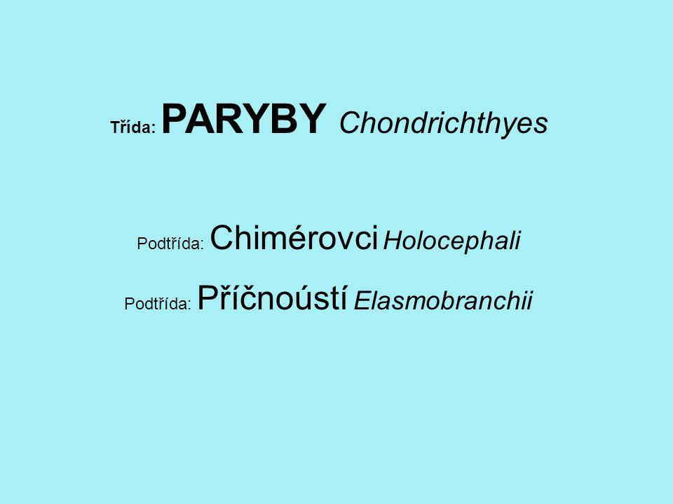 Třída: PARYBY Chondrichthyes Podtřída: Chimérovci Holocephali Podtřída: Příčnoústí Elasmobranchii