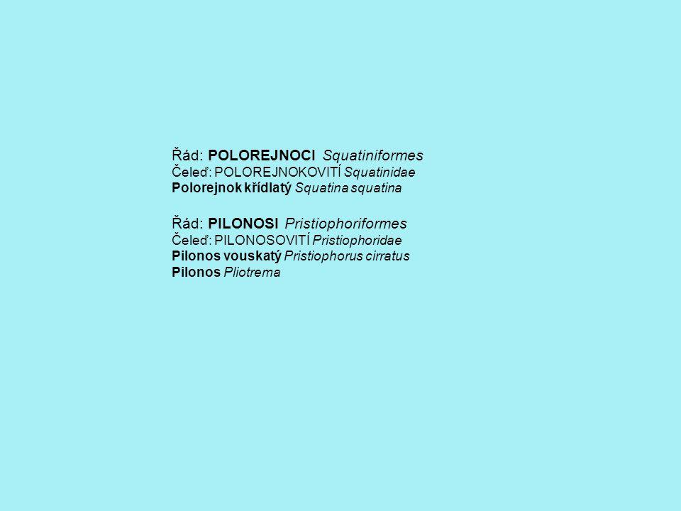 Řád: POLOREJNOCI Squatiniformes Čeleď: POLOREJNOKOVITÍ Squatinidae Polorejnok křídlatý Squatina squatina Řád: PILONOSI Pristiophoriformes Čeleď: PILONOSOVITÍ Pristiophoridae Pilonos vouskatý Pristiophorus cirratus Pilonos Pliotrema