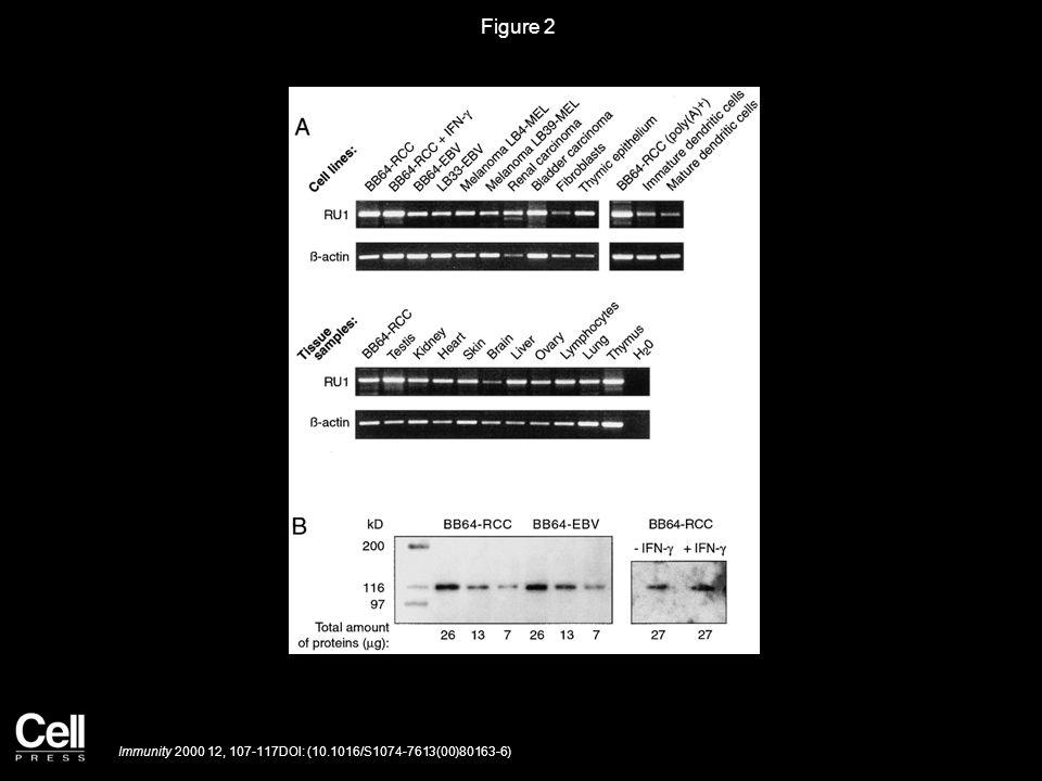 Figure 2 Immunity 2000 12, 107-117DOI: (10.1016/S1074-7613(00)80163-6)