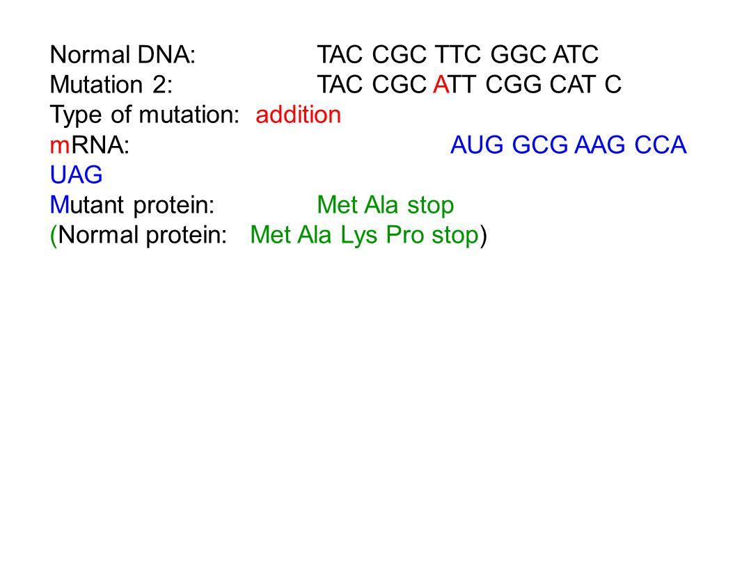 Normal DNA: TAC CGC TTC GGC ATC Mutation 2:TAC CGC ATT CGG CAT C Type of mutation: addition mRNA:AUG GCG AAG CCA UAG Mutant protein:Met Ala stop (Normal protein:Met Ala Lys Pro stop)