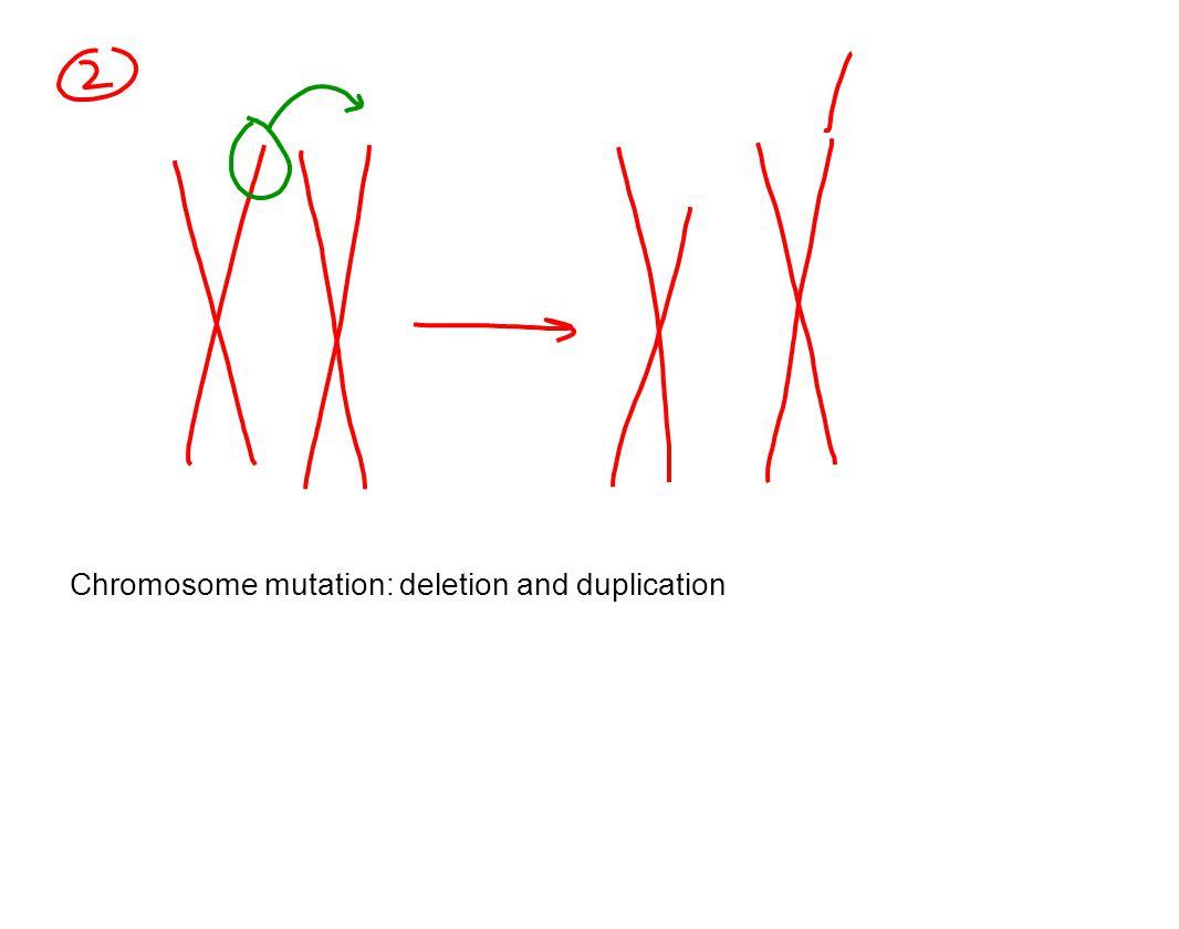 Chromosome mutation: deletion and duplication