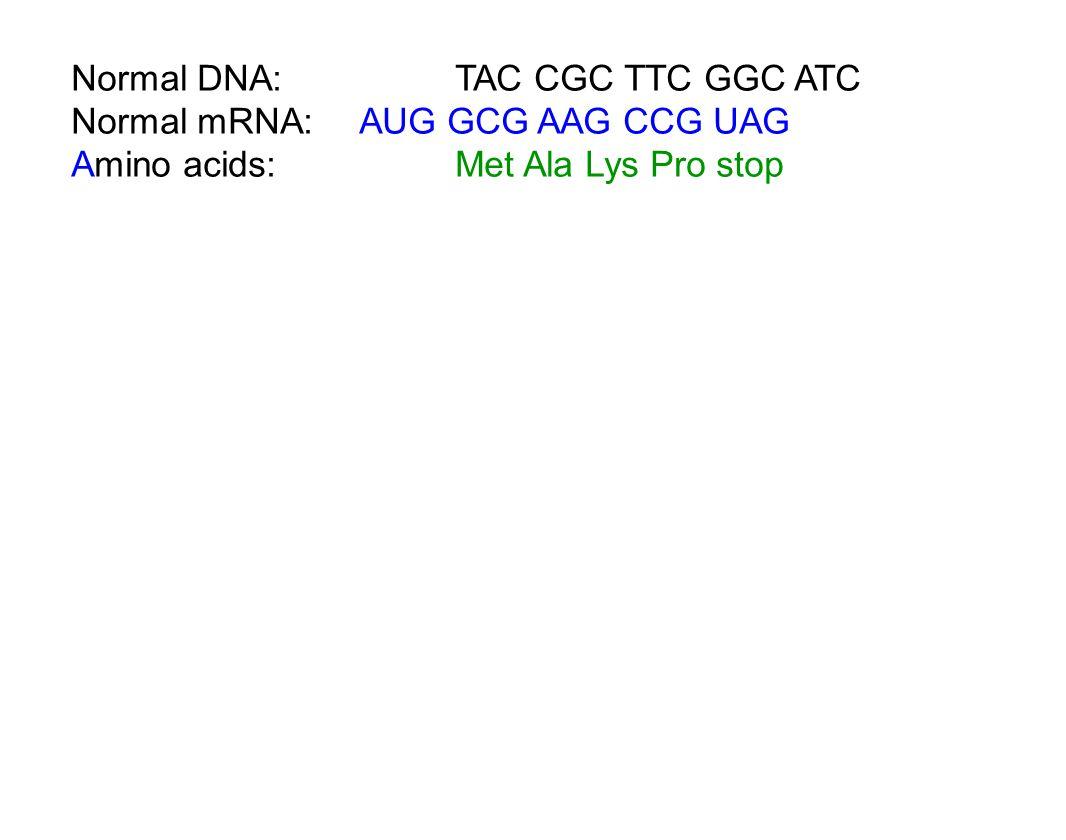 Normal DNA: TAC CGC TTC GGC ATC Normal mRNA:AUG GCG AAG CCG UAG Amino acids:Met Ala Lys Pro stop