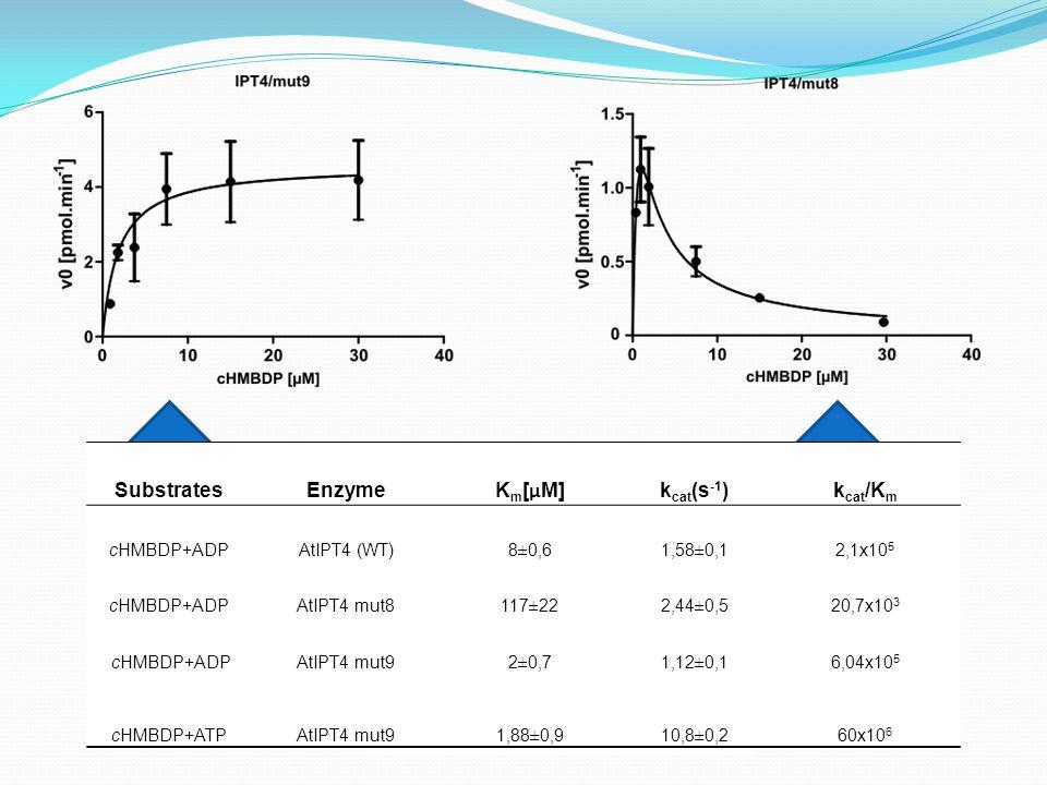 cHMBDP +ATP in Ser mutant cHMBDP +ATP in Gly mutant SubstratesEnzymeK m [ µ M]k cat (s -1 )k cat /K m cHMBDP+ADPAtIPT4 (WT)8±0,61,58±0,12,1x10 5 cHMBDP+ADPAtIPT4 mut8117±222,44±0,520,7x10 3 cHMBDP+ADPAtIPT4 mut92±0,71,12±0,16,04x10 5 cHMBDP+ATPAtIPT4 mut91,88±0,910,8±0,260x10 6