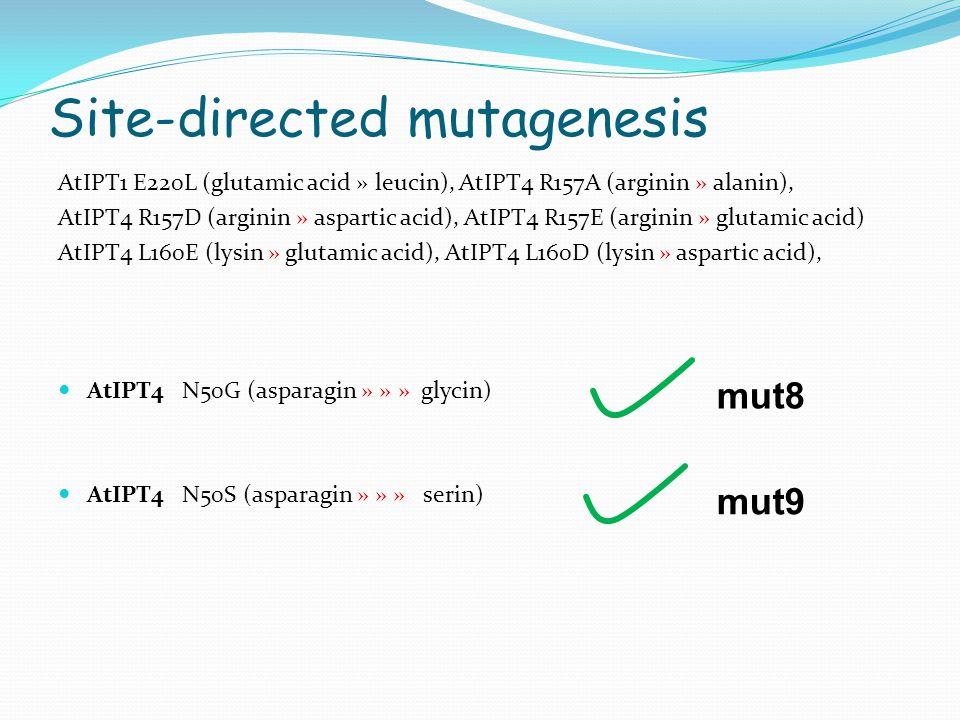 Site-directed mutagenesis AtIPT1 E220L (glutamic acid » leucin), AtIPT4 R157A (arginin » alanin), AtIPT4 R157D (arginin » aspartic acid), AtIPT4 R157E (arginin » glutamic acid) AtIPT4 L160E (lysin » glutamic acid), AtIPT4 L160D (lysin » aspartic acid), AtIPT4 N50G (asparagin » » » glycin) AtIPT4 N50S (asparagin » » » serin) mut8 mut9