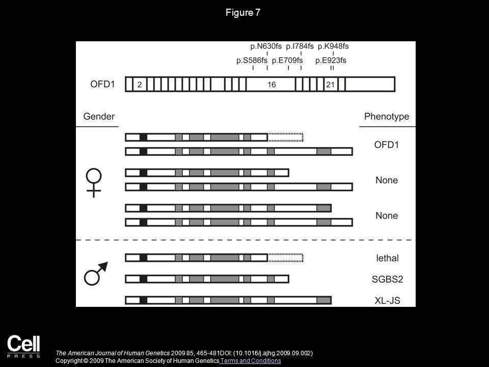 Figure 7 The American Journal of Human Genetics 2009 85, 465-481DOI: (10.1016/j.ajhg.2009.09.002) Copyright © 2009 The American Society of Human Genet