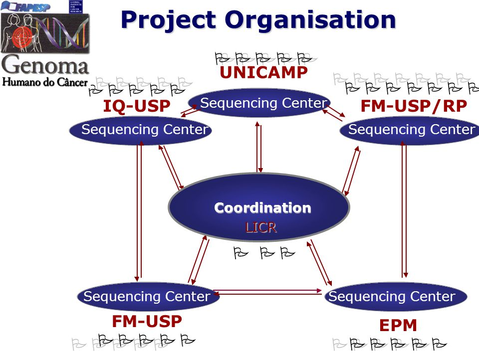 Project Organisation Sequencing Center FM-USP Sequencing Center UNICAMP Sequencing Center EPM FM-USP/RP Sequencing Center IQ-USP Coordination P P P P P PPPPP P P P P P PPPPP P P P P P PPPPP P P P P PPPPPP P P P P P P P PPPPPPP P P P LICR Sequencing Center