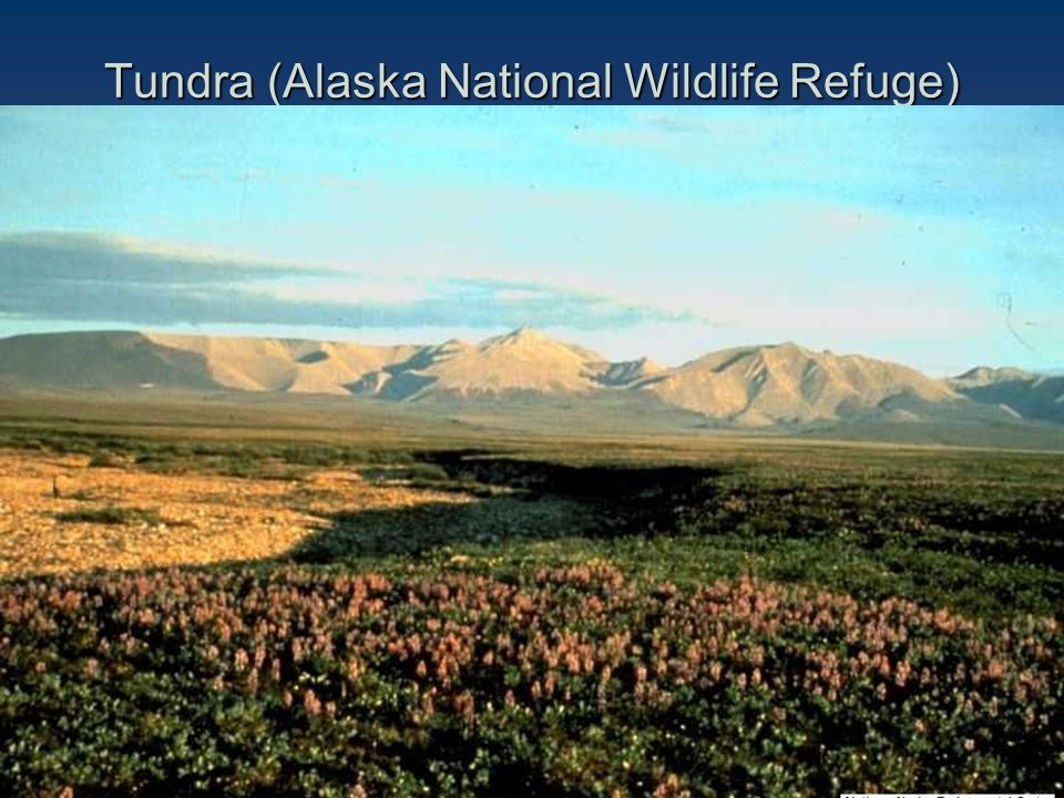 Tundra (Alaska National Wildlife Refuge)