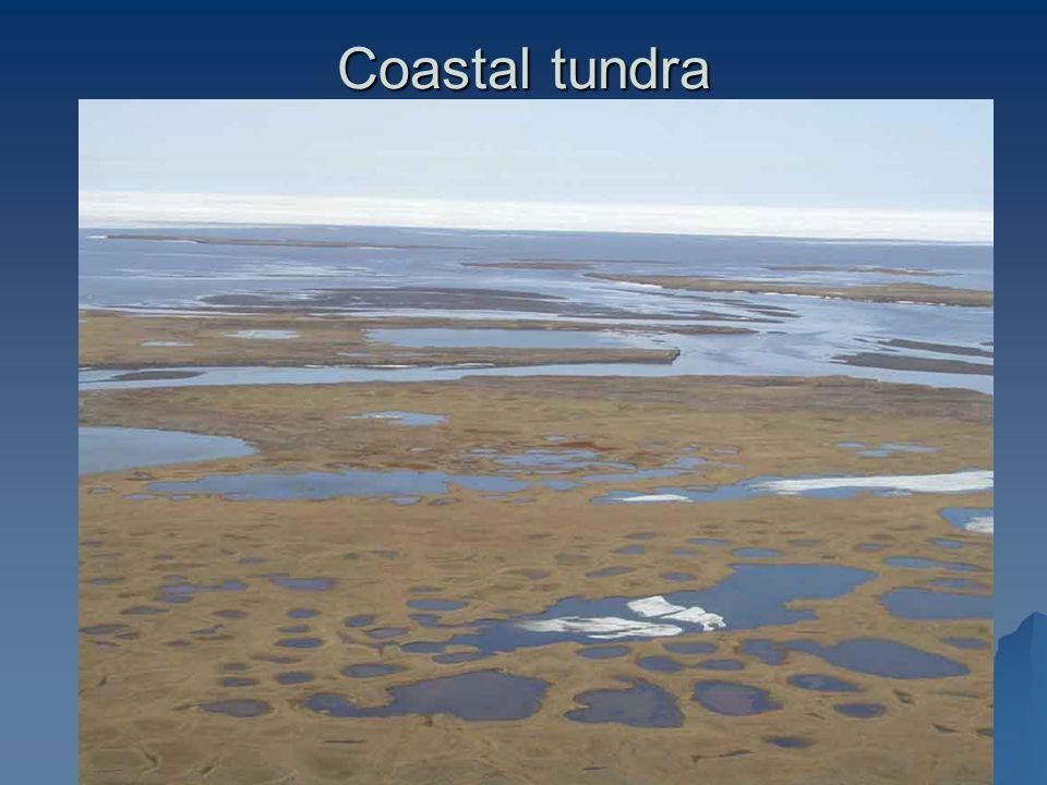 Coastal tundra