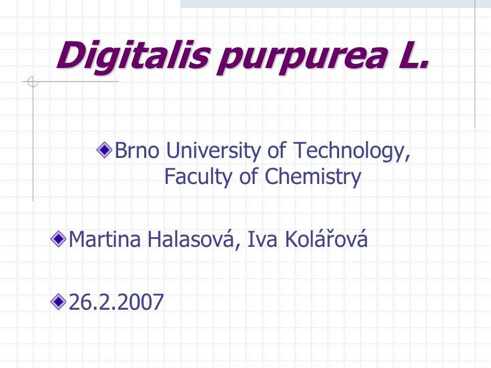 Digitalis purpurea L. Brno University of Technology, Faculty of Chemistry Martina Halasová, Iva Kolářová 26.2.2007