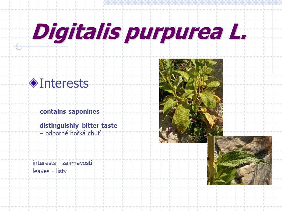Interests contains saponines distinguishly bitter taste – odporně hořká chuť interests - zajímavosti leaves - listy