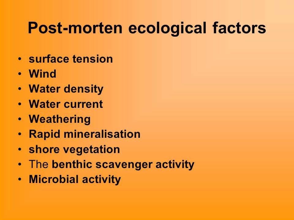 Post-morten ecological factors surface tension Wind Water density Water current Weathering Rapid mineralisation shore vegetation The benthic scavenger