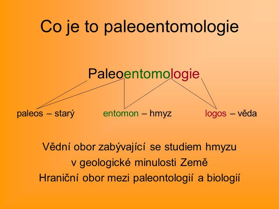Co je to paleoentomologie Paleoentomologie paleos – starý entomon – hmyz logos – věda Vědní obor zabývající se studiem hmyzu v geologické minulosti Země Hraniční obor mezi paleontologií a biologií